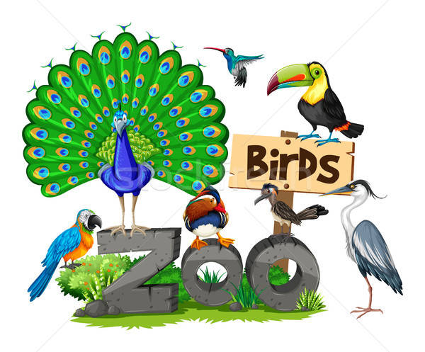 600x497 Different Kinds Of Birds In The Zoo Vector Illustration Daniel