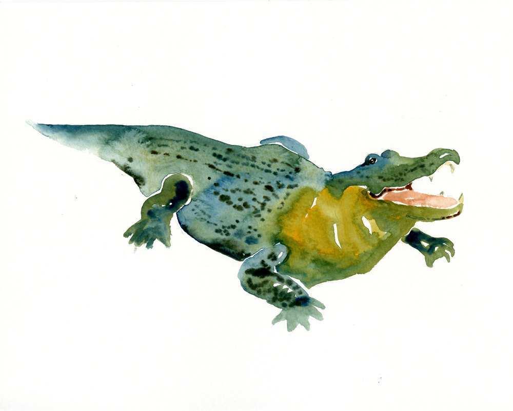 1000x801 Alligator Painting Luxury Alligator 7x5inch Art Print Animal