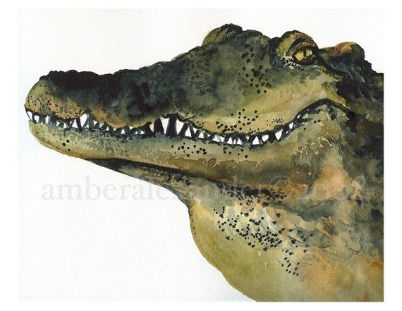 570x441 Looker Alligator Art Alligator Watercolor Etsy