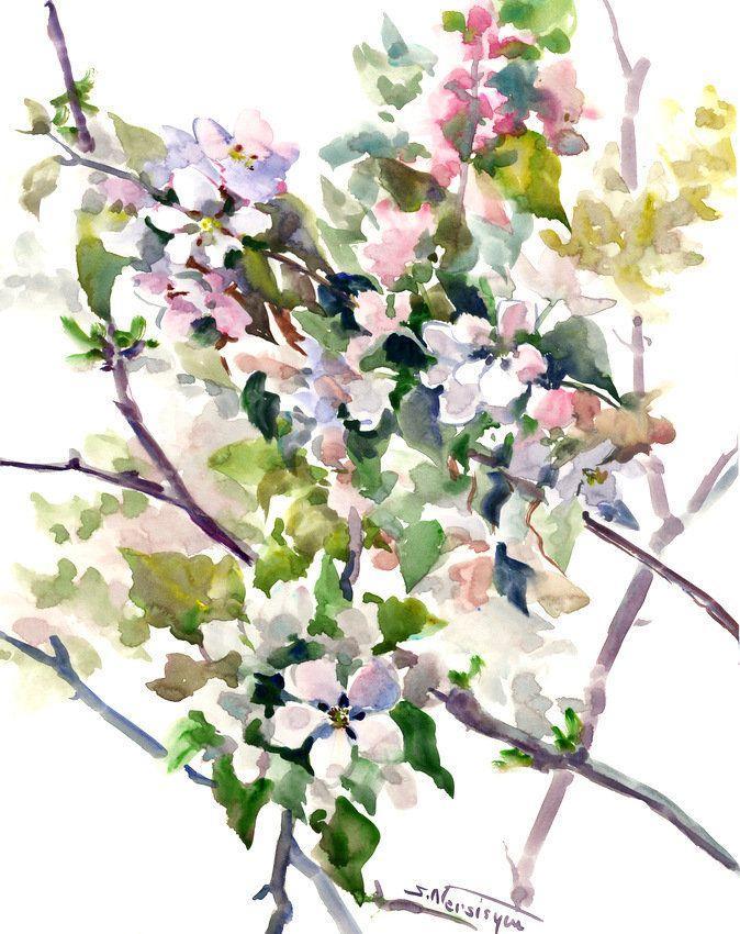 674x850 Apple Blossom, Spring Blossom ,original Watercolor Painting, White