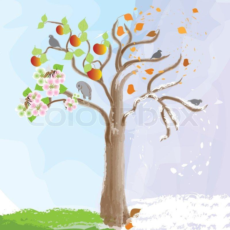 800x800 Apple Tree. Four Seasons, Watercolor Design Stock Vector Colourbox