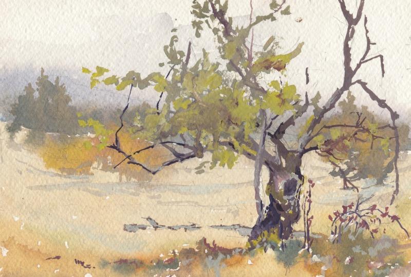 800x540 Little Apple Tree, Watercolor Plein Air Vinita Pappas