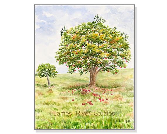 570x456 Apple Art Apple Painting Apple Tree Landscape Watercolor Red Etsy