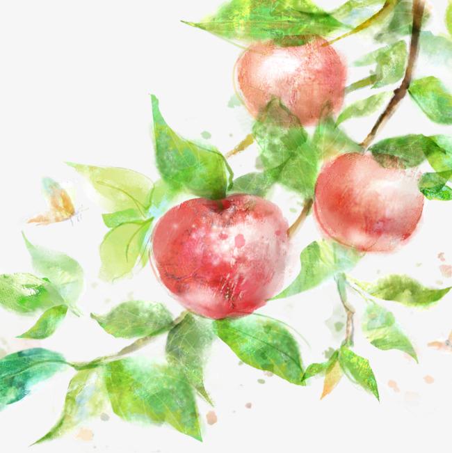 650x651 Watercolor Apple Tree, Tree Clipart, Watercolor Clipart, Apple
