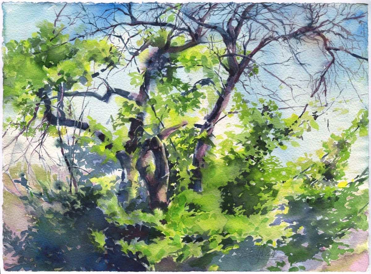 1200x885 Watercolor Tree Painting Inspirational Apple Tree Watercolor Art