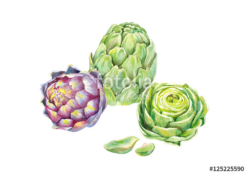 500x353 Green And Pupler Artichokes, And Half Green Artichoke, Watercolor