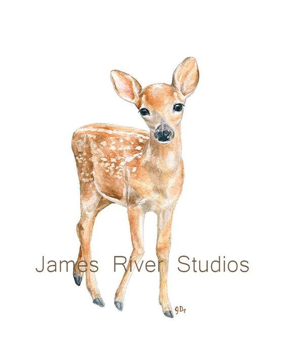 570x713 Deer Art Deer Painting Deer Print. Baby Deer Watercolor Baby Etsy