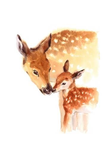 366x488 Mother And Baby Deer Watercolor Prints By Cmwatercolors