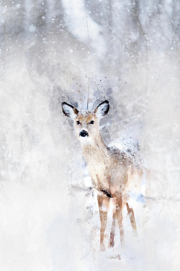 599x900 Baby Deer In The Snow Watercolor Painting By Mata