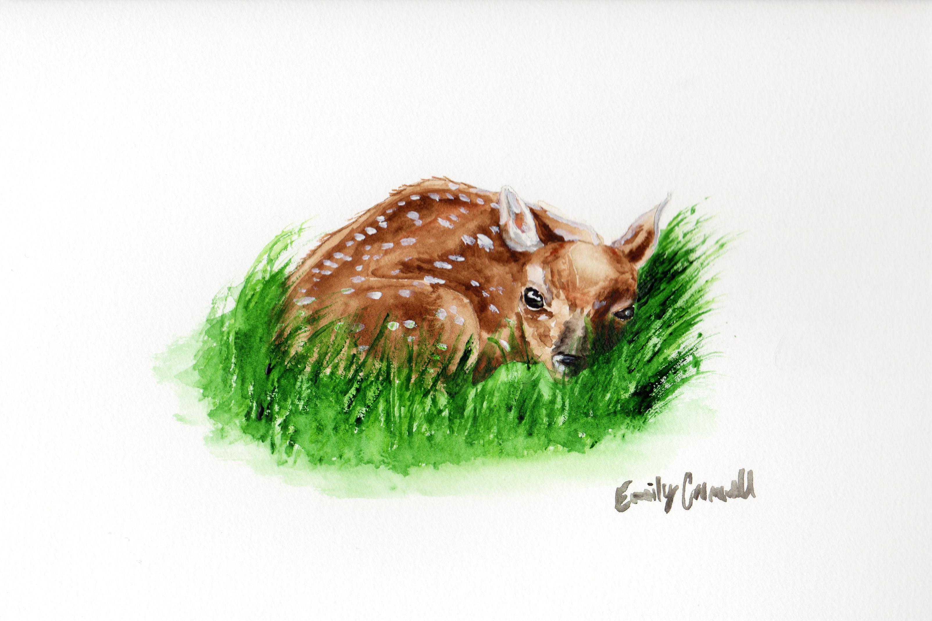 3207x2138 Baby Deer Watercolor Painting