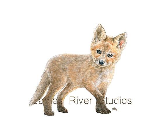570x456 Fox Art Fox Painting Fox Print Baby Fox Watercolor Baby Animal Etsy