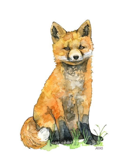 570x712 Watercolor Baby Fox Painting Print Titled Baby Etsy