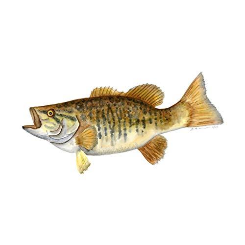 500x500 Smallmouth Bass Print, Nautical Nursery Fish Portrait