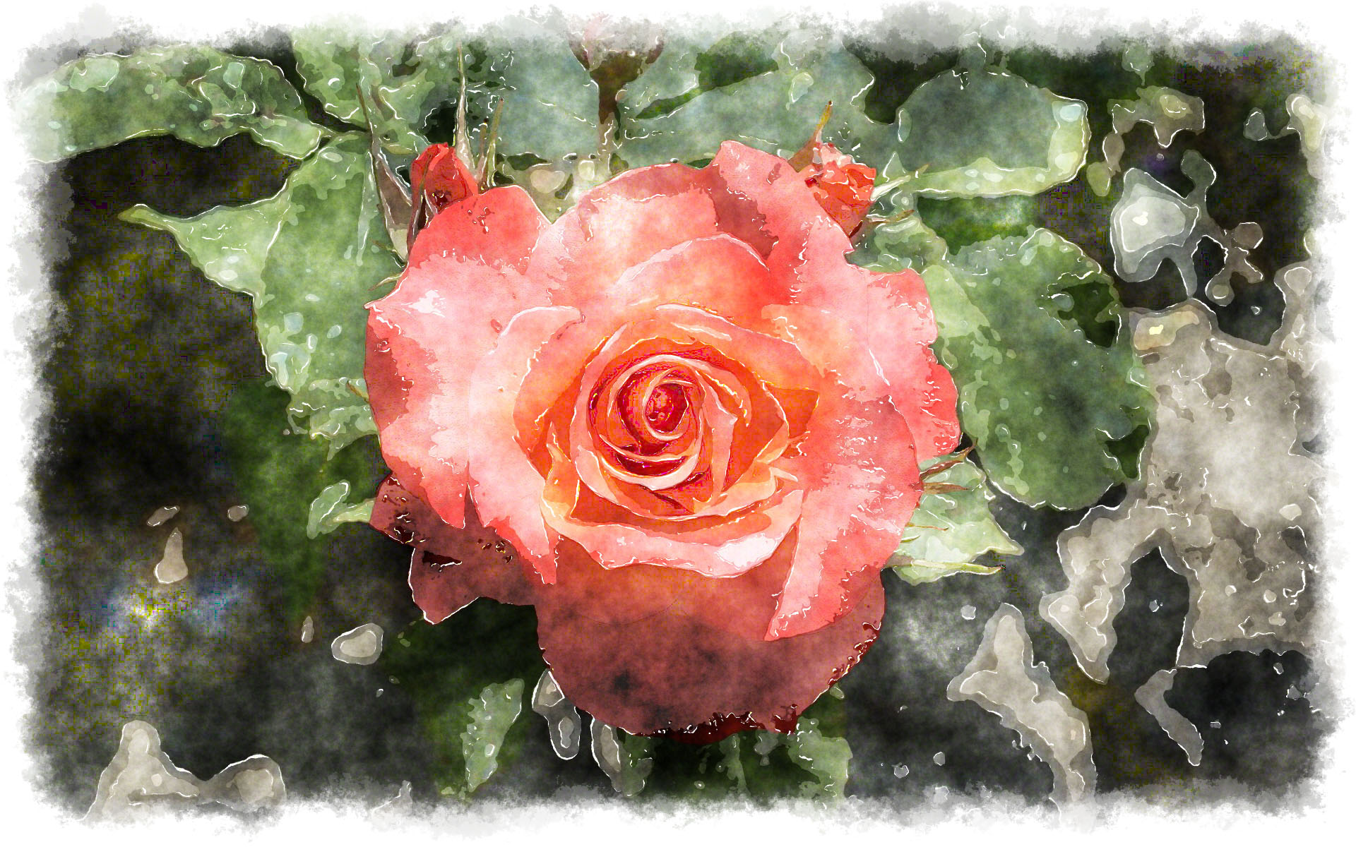 1920x1200 Beautiful Watercolor Rose