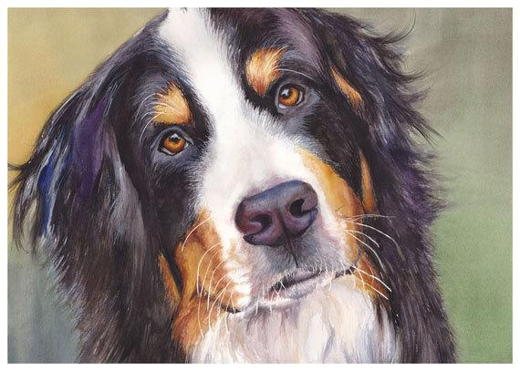 Bernese Mountain Dog Watercolor