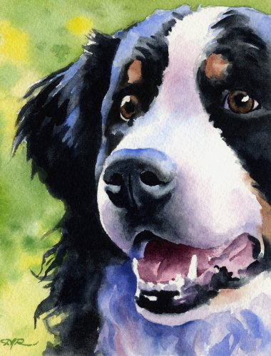 380x500 Bernese Mountain Dog Dog Art Print Signed By