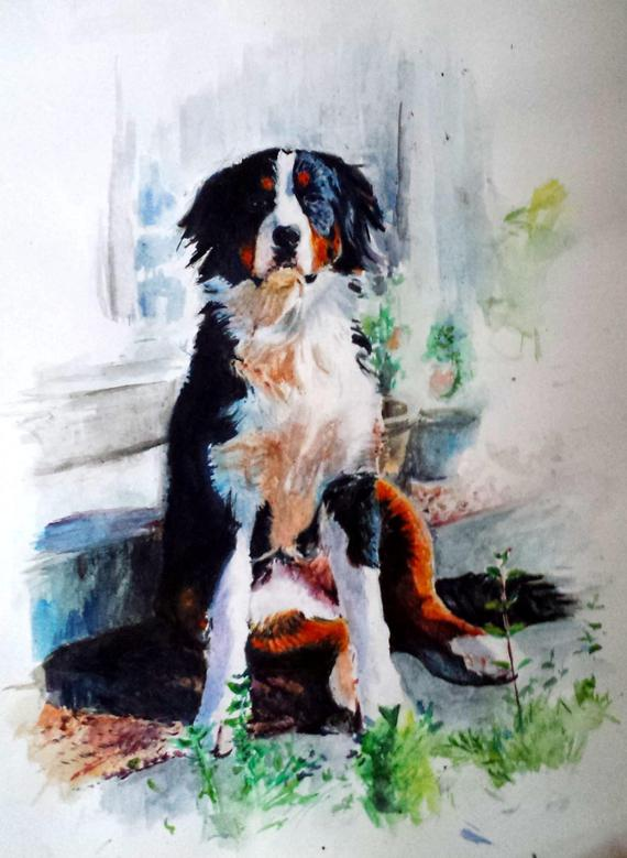 570x779 Custom Bernese Mountain Dog Watercolour Portrait. Pet Portrait Etsy