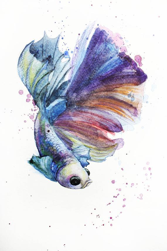 570x855 Print Of Watercolor Fish Illustration Fish Betta Art Betta Etsy