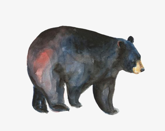 564x447 Watercolor Black Bear, Watercolor Clipart, Animal, Painted Black