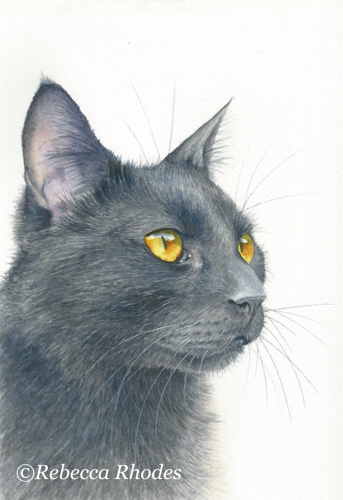 1344x1956 How To Paint A Black Cat In Watercolor