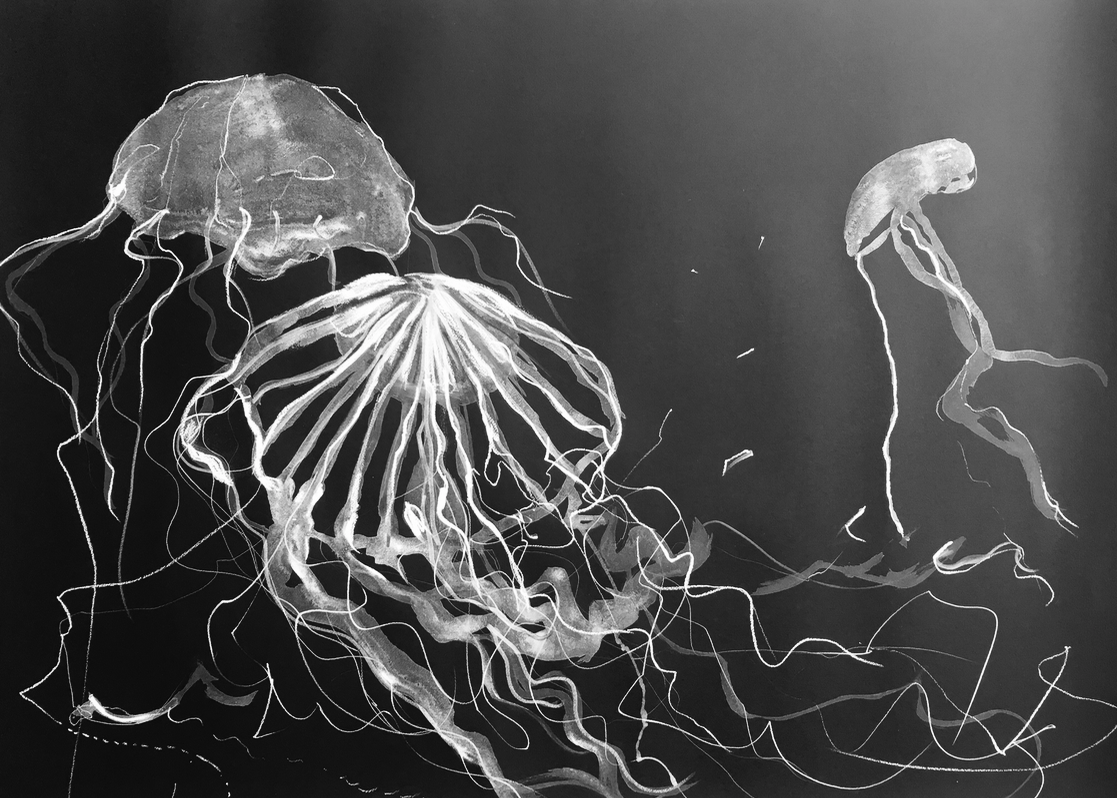 1117x798 30 X 44 Acrylic And Pastel Jellyfish Study On Black Watercolor