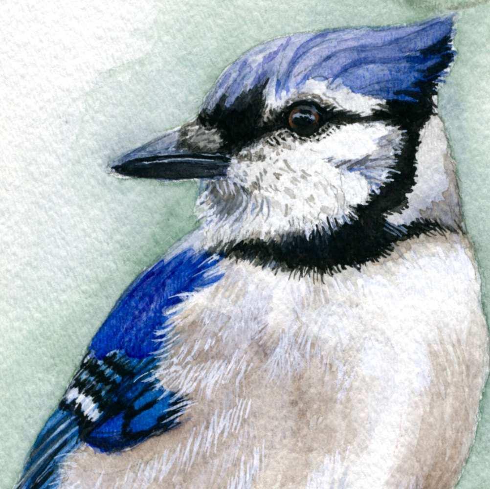 1002x1000 Blue Jay Painting New Blue Jay Painting Blue Jay Art Bird Art