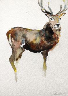 Buck Watercolor
