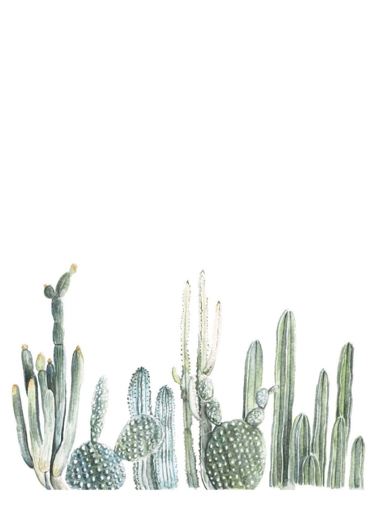 1280x1760 Cactus