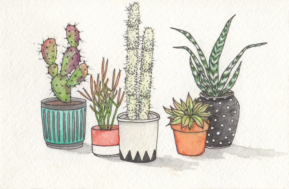 1000x655 Cacti Hilary Wootton