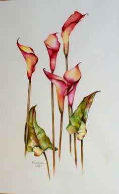 Calla Lily Watercolor