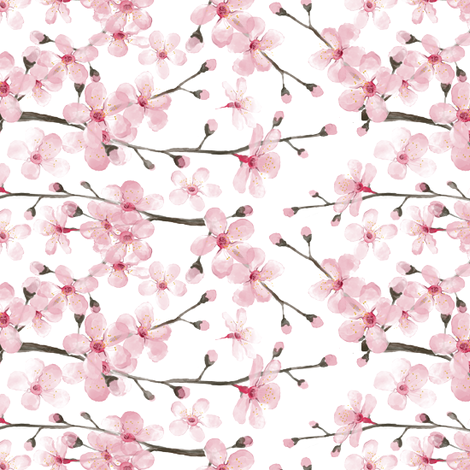 470x470 Cherry Blossom Watercolor Cherry Blossom Floral Wallpaper