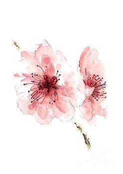 247x350 Cherry Blossom, Blossom Wall Art, Buy Art Online, Flower Blossom