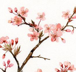 260x249 Download Cherry Blossom Watercolor Clipart Cherry Blossom