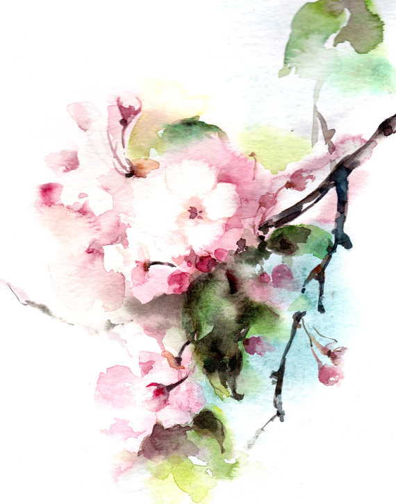 570x726 Cherry Blooming Branch Fine Art Print, Floral Watercolour Painting