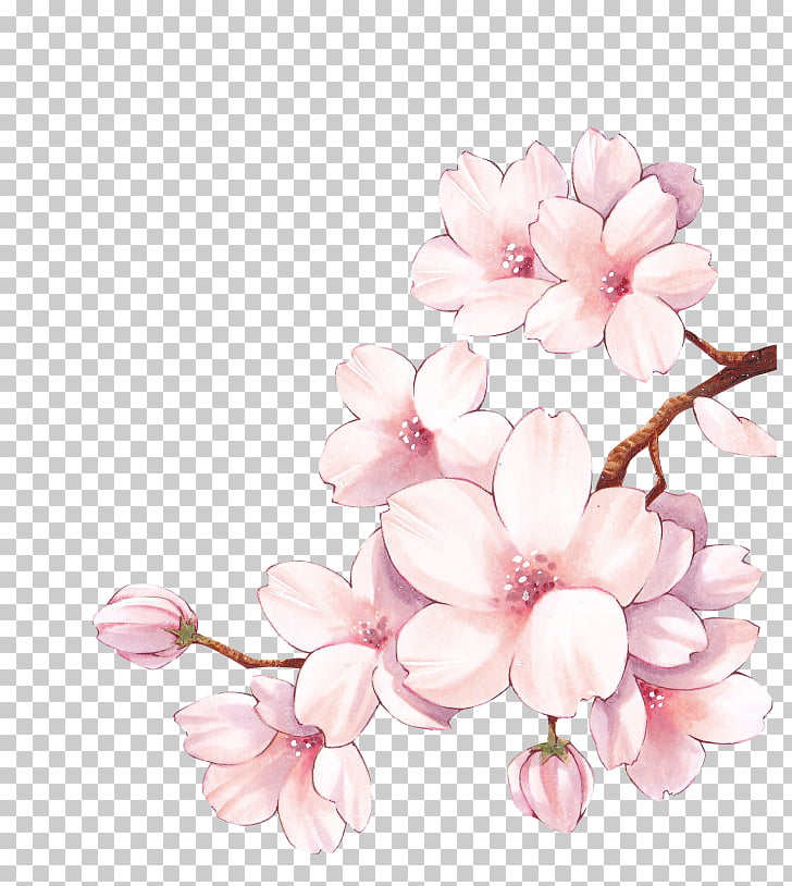 728x814 Paper Cherry Blossom Watercolor Painting Flower, Cherry Blossom