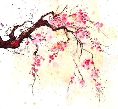 500x460 Cherry Blossom Paintings Cherry Blossom Watercolor Painting Cherry