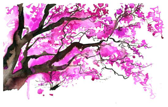 549x350 Chinese Blossom Tree Watercolor Cherry Blossom Tree By Cherry