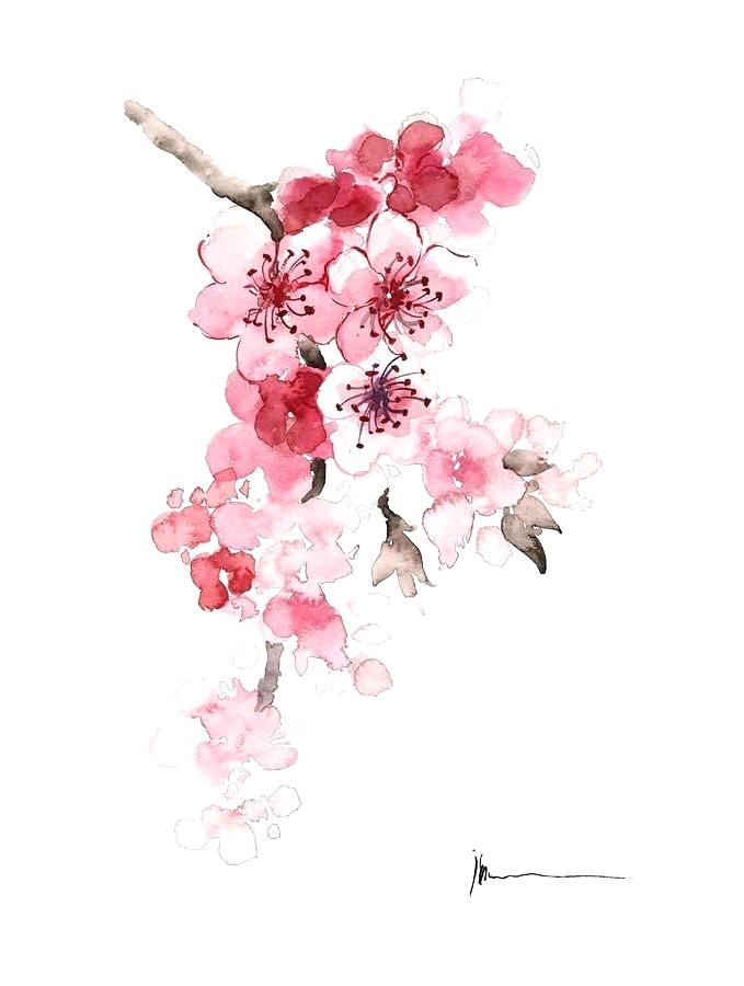 679x900 Cherry Blossom Watercolor Art. Image Result For Cherry Blossom