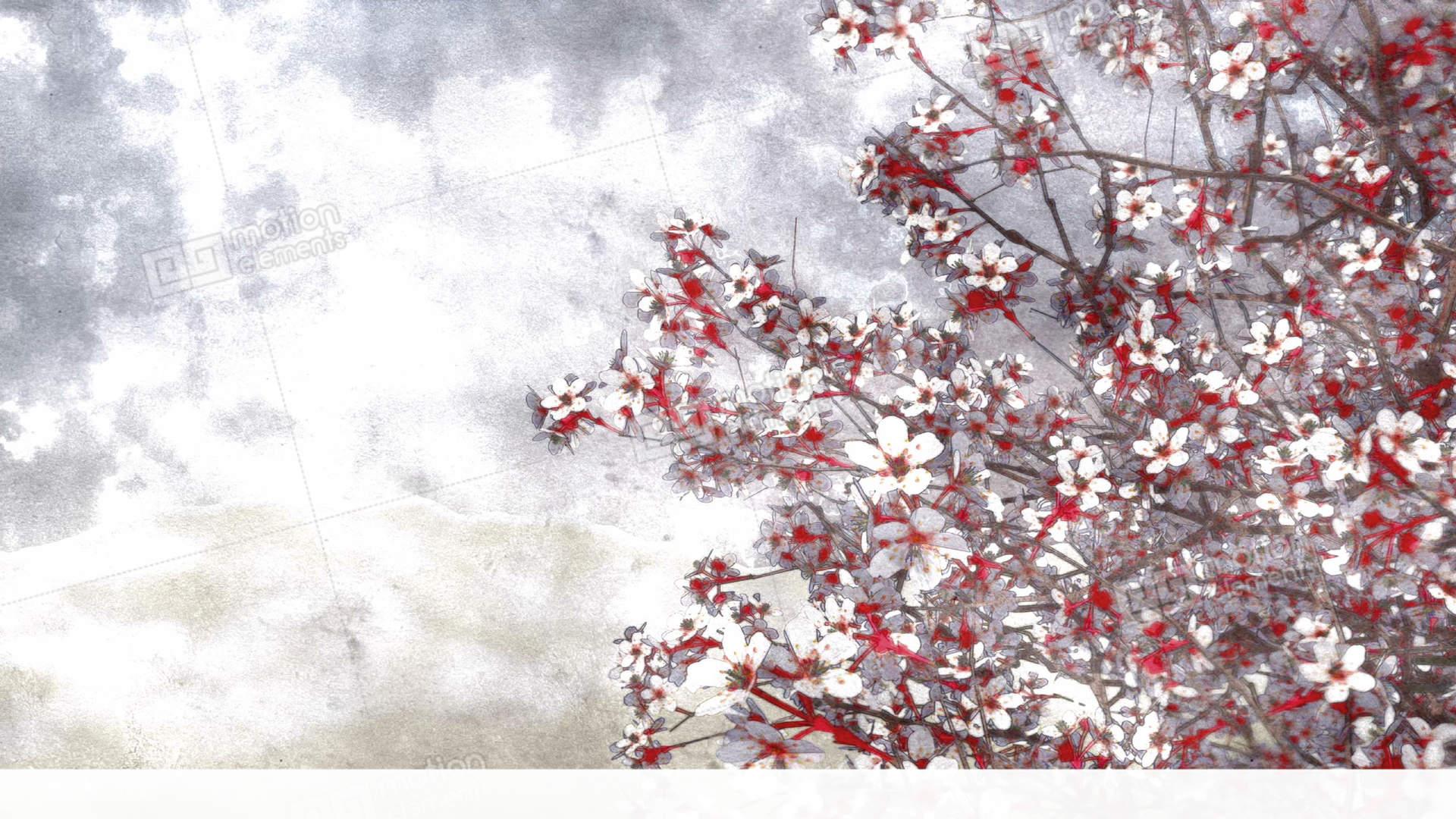 1920x1080 Blooming Sakura Cherry Watercolor Art Style Stock Animation 11364970