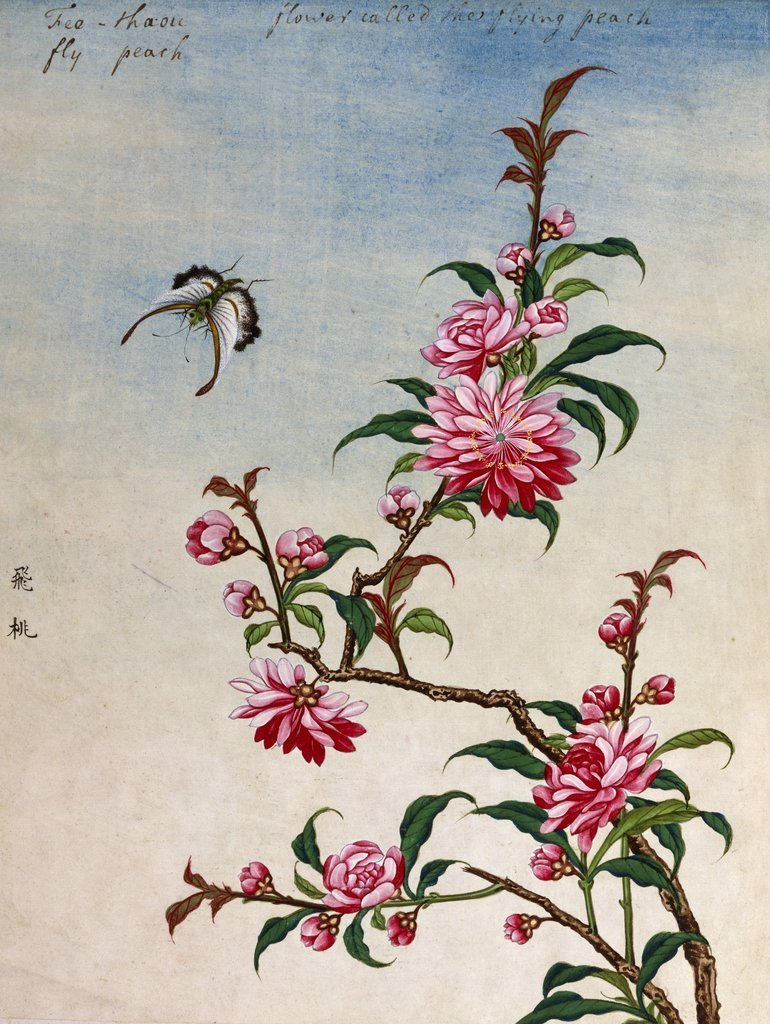 770x1024 18th Century Chinese Watercolor Of Pink Flowers Posters Amp Prints