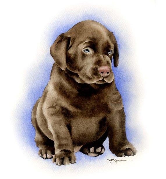 570x617 Chocolate Lab Puppy Labrador Retriever Art Print By Watercolor Etsy