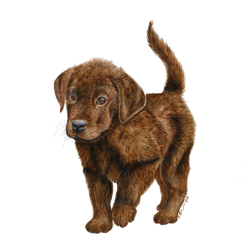 1024x1024 Chocolate Labrador Portrait Dog Animal Art Tiny Toes Design