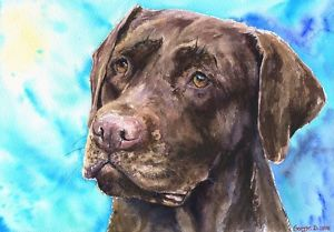 300x209 Chocolate Labrador Print Of The Original Watercolor Painting