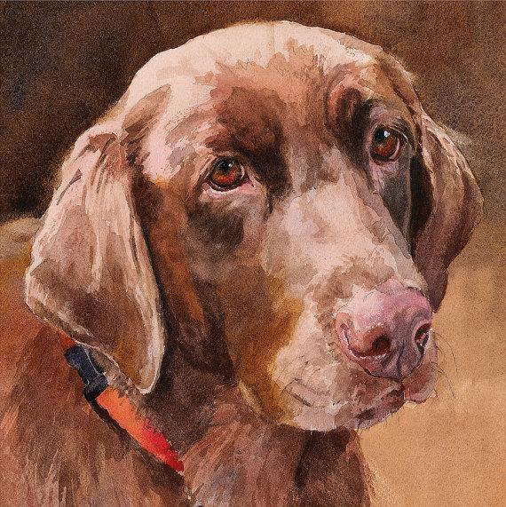 570x571 Chocolate Labrador Retrieverprint Of Watercolor Dog Painting