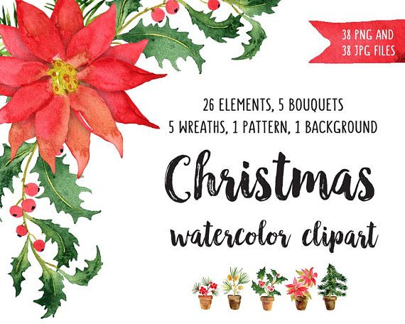 570x456 Christmas Watercolor Clip Art Poinsettia Clipart Watercolor Bundle