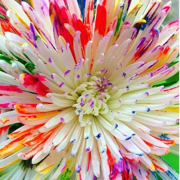 Chrysanthemum Watercolor