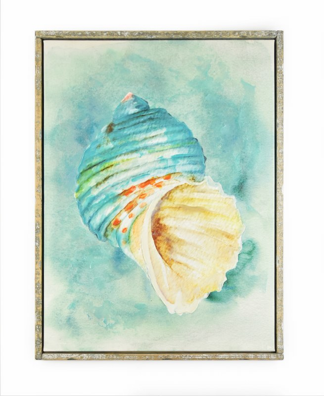 655x800 30 X 40 Blue Turban Conch Shell On Turquoise In Frame