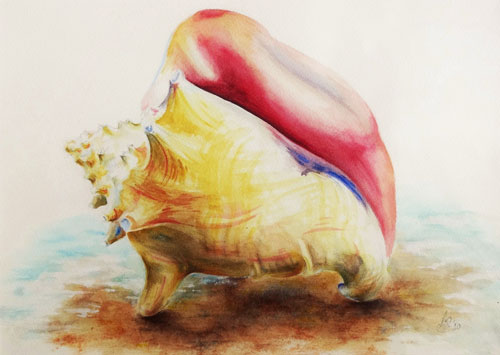 500x355 Queen Conch Shell Artistic Works By Anita Cunningham