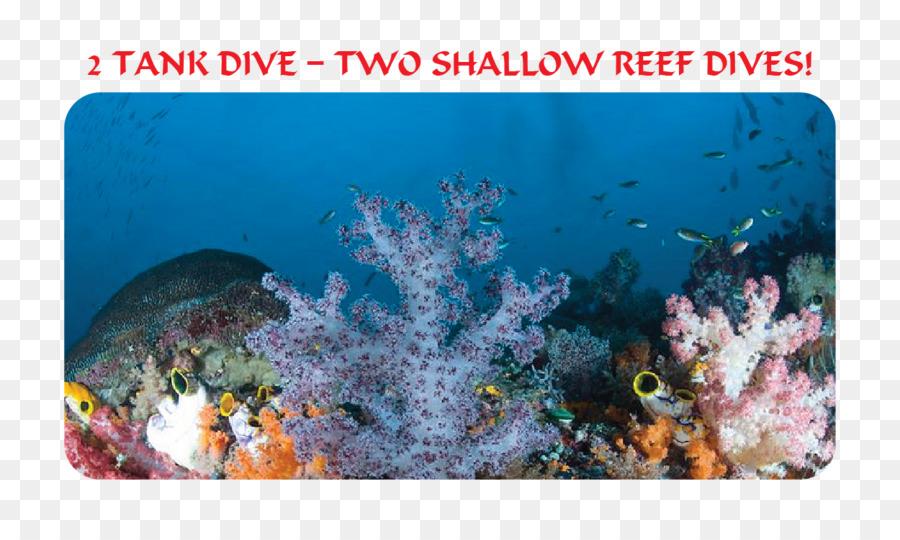 900x540 Coral Reef Fish Stony Corals Ecosystem Marine Biology