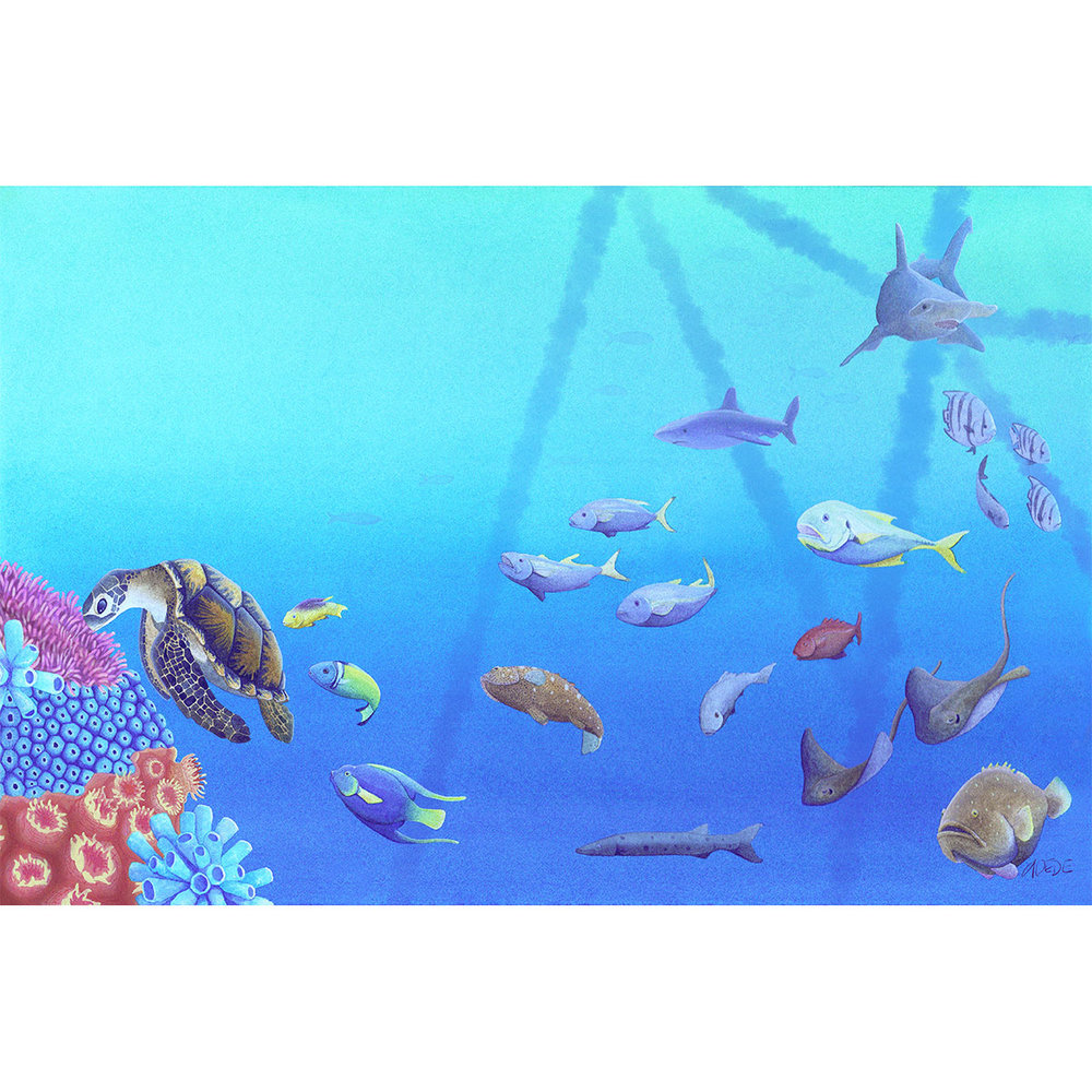 1000x1000 The Curious Wild Coral Reef